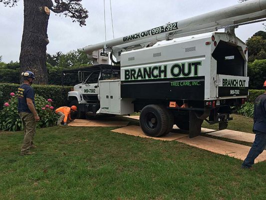 branch-out-tree-care-santa-barbara-ca-80-year-old-pine-removed-in-montecito-2