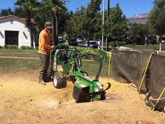 branch-out-tree-care-santa-barbara-ca-landmark-tree-removal-at-braille-institute-4