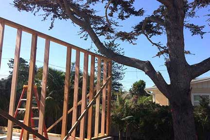 branch-out-tree-care-santa-barbara-winter-tree-care